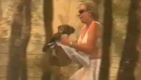 ქალმა საკუთარი სიცოცხლე საფრთხეში ჩააგდო, რათა დამწვარი კოალა ცეცხლმოკიდებული ტყიდან გამოეყვანა (ემოციური ვიდეო)