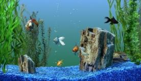 როგორ ავიცილოთ თავიდან თევზისთვის საშიში დაავადებები