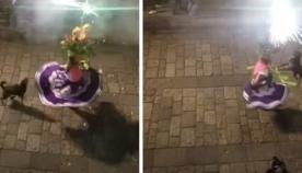 უპატრონო ძაღლმა ქუჩაში გამართული ფესტივალის მონაწილესთან ერთად იცეკვა (სახალისო ვიდეო)