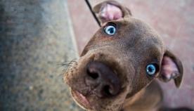 ძაღლს შეუძლია ადამიანის განწყობა წაიკითხოს მისი სახის მიმიკის მიხედვით