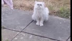 მამაკაცმა თავის ეზოში ყველაზე საშინელი შესახედაობის კატა დაინახა   (სახალისო ვიდეო)