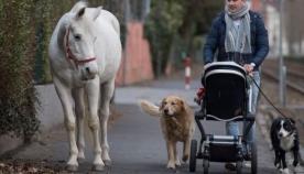ცხენი ყოველდღე მარტო გამოდის ქალაქში სასეირნოდ, რადგან მოხუც პატრონს მისი გასეირნება აღარ შეუძლია
