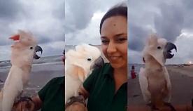 თუთიყუშმა პირველად იხილა ოკეანე. მის რეაქციას პატრონიც არ ელოდა (სახალისო ვიდეო)