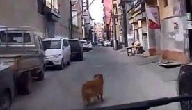ერთგულმა ძაღლმა მომაკვდავი პატრონი არ მიატოვა და სასწრაფო დახმარების მანქანა მასთან მიიყვანა (ემოციური ვიდეო)