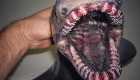 ეს მეთევზე ოკეანის სიღრმეში პოულობს ისეთ არსებებს, რომლებიც შეიძლება, მხოლოდ საშინელებათა ფილმებში იხილოთ