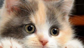 რჩევები მათთვის, ვინც გადაწყვიტა შინ კატა იყოლიოს