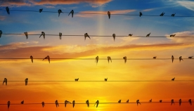 გლობალური დათბობა გადამფრენი ფრინველების ქცევას ცვლის