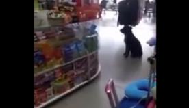 უპატრონო ძაღლმა მაღაზიაში მუყაოს ყუთი მოითხოვა, რათა საწოლი გაეკეთებინა (ემოციური ვიდეო)