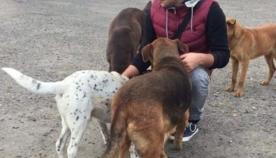 სენაკელი ბიჭები, რომლებიც მიუსაფარ ცხოველებს უანგაროდ ეხმარებიან (ემოციური ვიდეო)