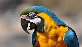 6 წარმოუდგენელი დანაშაული, რომელიც თუთიყუშების დახმარებით გახსნეს