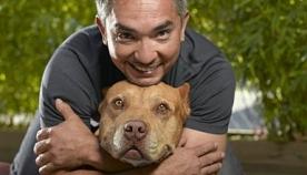 10 მთავარი და ელემენტარული წესი ძაღლის გაზრდისას