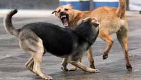ძაღლებს შორის აგრესია