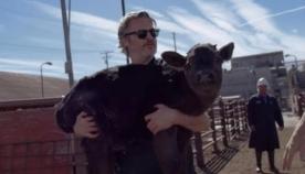 ხოაკინ ფენიქსმა სასაკლაოდან ძროხა და მისი ნაშიერი გადაარჩინა (ემოციური ვიდეო)