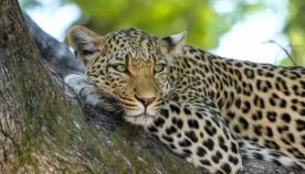 მკვლევარებმა გადაშენების პირას მყოფი ცხოველთა სახეობების რაოდენობა დაასახელეს