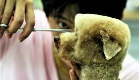 კუბიზმი ძაღლების ვარცხნილობაში