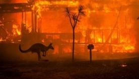კოალების პოპულაციისა და ტყეების აღდგენისთვის ავსტრალიის ხელისუფლებამ 35 მილიონი დოლარი გამოყო