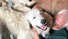ხანძრის დროს მეცხვარე ძაღლმა თავისი ჯოგი გადაარჩინა იმ დროს, როცა პატრონმა მათი შველა ვერ შეძლო
