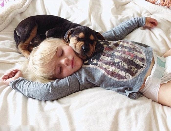 თუ სიზმარში ძაღლი ნახეთ!