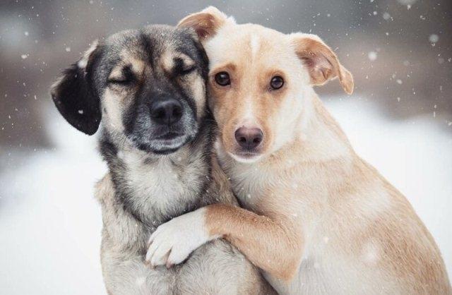 ძაღლების ემოციური ჩახუტება ფოტოსესიის დროს