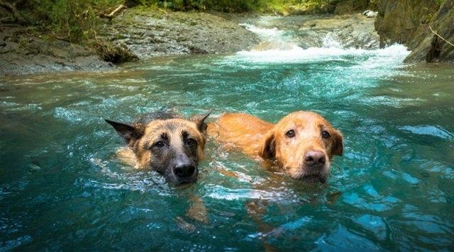 როგორ უნდა მოიქცეს პატრონი, თუ ძაღლს წყლის ეშინია?