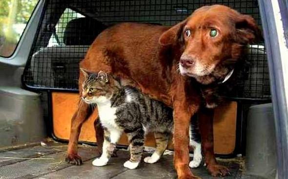 უსინათლო ძაღლის, ერთგული მეგობარი კატა (+ვიდეო)