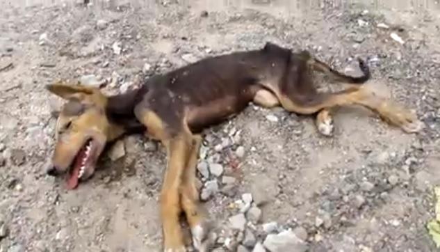 ისინი მკვდარ ძაღლს მიუახლოვდნენ, რომ დაეკრძალათ, მაგრამ უეცრად…  (+ვიდეო)