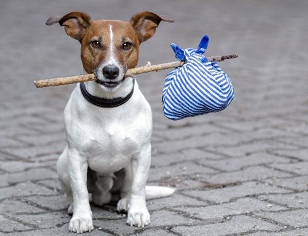 მითი თუ რეალობა: შეუძლია ძაღლს სახლისკენ მიმავალი გზა თავად იპოვოს?