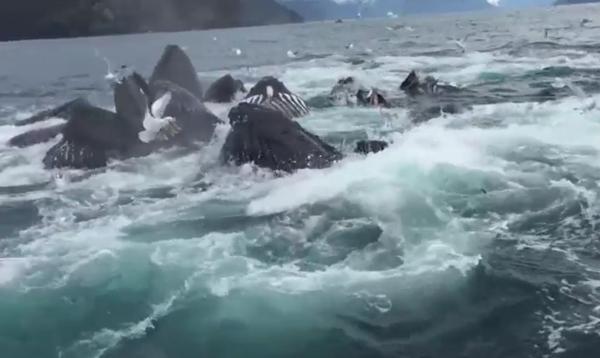 ის ვიდეო კამერით იღებდა მშვიდ ზღვას. უეცრად მოულოდნელი რამ მოხდა (+ვიდეო)