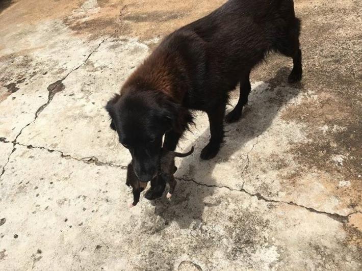 ძაღლი უბრალოდ არ იქექებოდა სანაგვეზე - მან სიცოცხლე გადაარჩინა...