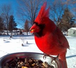 ის საოცარ ფოტოებს იღებს, სანამ ჩიტები საკენკს მიირთმევენ… (+ფოტო)