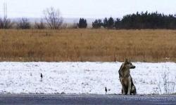 ეს ერთგული ძაღლი ელოდება პატრონს, რომელიც ავტოავარიაში დაიღუპა