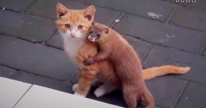 კნუტმა უცნაური მეგობარი იპოვა (+ვიდეო)