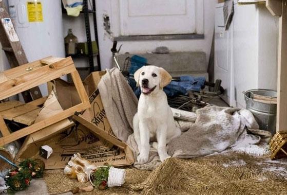 როგორ გადავაჩვიოთ ძაღლი ავეჯის ღრღნას