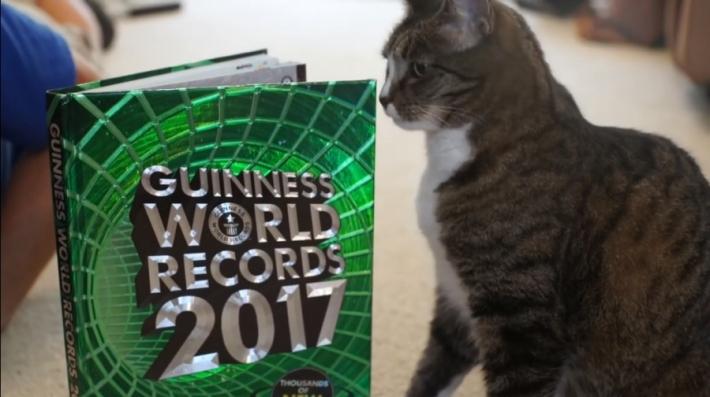 """კატამ წუთში შესრულებული """"ტრიუკების"""" რაოდენობით მსოფლიო რეკოდრი მოხსნა (+ვიდეო)"""