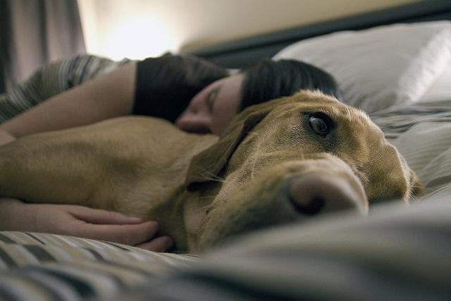 ძაღლსა და ადამიანს შორის განსაკუთრებული კავშირი არსებობს