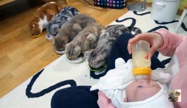 კატები ოჯახის ახალ წევრს ეცნობიან. მათი რეაქცია შეუდარებელია! (+ვიდეო)