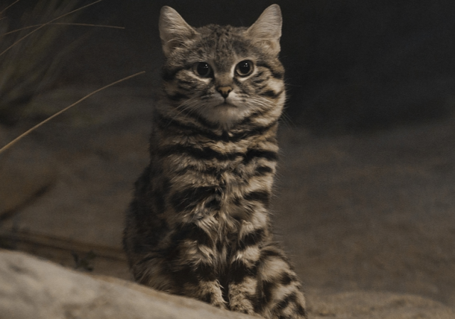 """""""სიკვდილის მანქანა"""": სპეციალისტებმა დაასახელეს ყველაზე საშიში კატის სახეობა მსოფლიოში"""