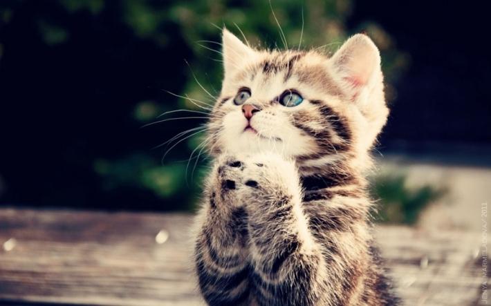 ნამდვილად იცით თქვენს კატას როდის რა სურს?