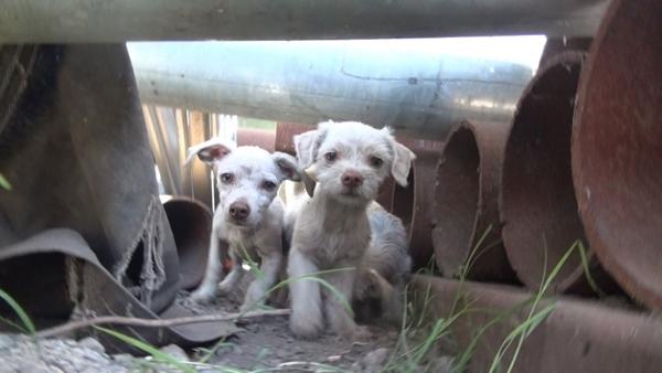 ისინი ეძებდნენ დედა ძაღლს ლეკვებით, მაგრამ წარმოუდგენელია ვინ ზრუნავდა ამ პატარებზე (+ვიდეო)