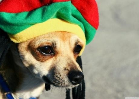 სპეციალისტებმა დაადგინეს, რომ ძაღლებს რეგის სტილის მუსიკა მოსწონთ