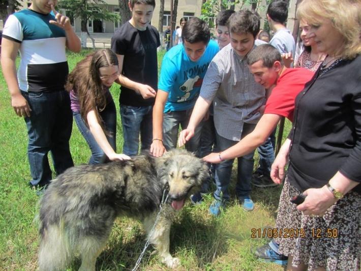 თბილისის 106-ე სკოლის ეზოში მუნიციპალური თავშესაფრიდან აყვანილი კავკასიური ნაგაზის ჯიშის ძაღლი იცხოვრებს