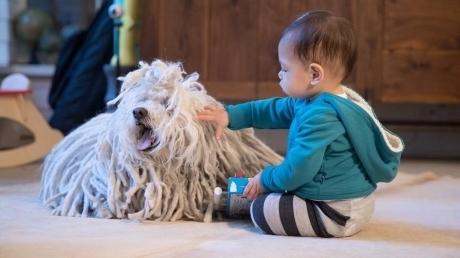 """მარკ ცუკერბერგის შვილმა წარმოთქვა პირველი სიტყვა - """"ძაღლი"""""""