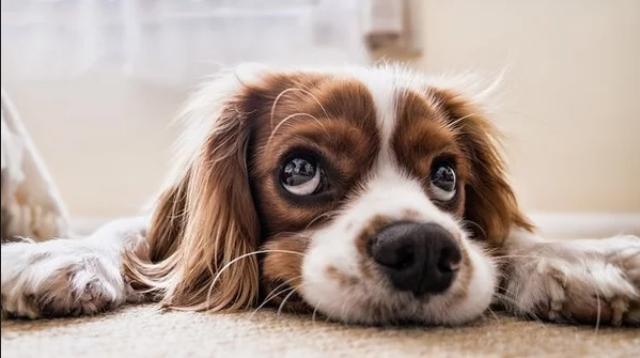 ძაღლების შესახებ რამდენიმე ფაქტი, რომლებიც შესაძლოა, პირველად შეიტყოთ