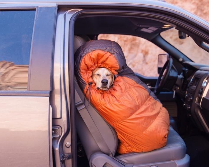 მთელი ქვეყანა ერთად შემოვიარეთ! - ისტორია ფოტოგრაფზე, რომელმაც თავშესაფრიდან აყვანილ ძაღლთან ერთად ამერიკა შემოიარა (+ფოტო)