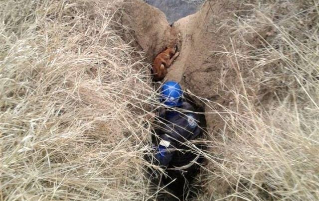 ვარკეთილში, ხევში ჩავარდნილი ძაღლი მაშველებმა გადაარჩინეს