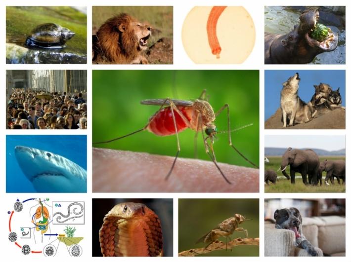 ადამიანის სიცოცხლისთვის ყველაზე საშიში ცხოველები