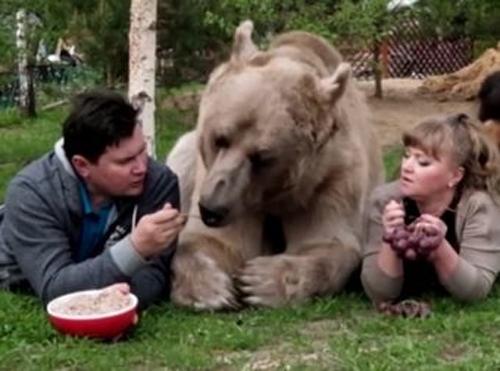 """წყვილი, რომელმაც დათვი """"იშვილა"""" (+ვიდეო)"""