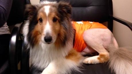 სტაჟიორმა ვეტერინარმა ძაღლი ევთანაზიიდან ერთი წუთით ადრე გადაარჩინა