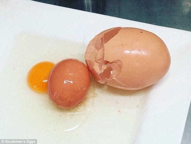 კვერცხი–კვერცხში - ავსტრალიაში უზარმაზარი ქათმის კვერცხი აღმოაჩინეს