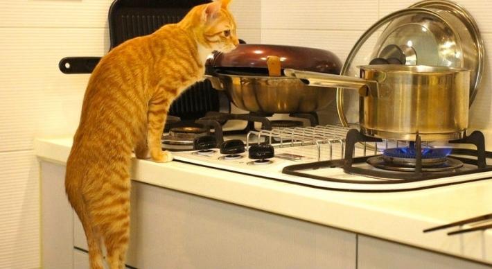 30 საშუალება, თუ როგორ შეგიძლიათ გამოიყენოთ კატა სახლის საქმეში